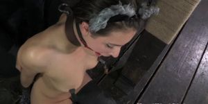 Kitten sub gagged with buttplug tail